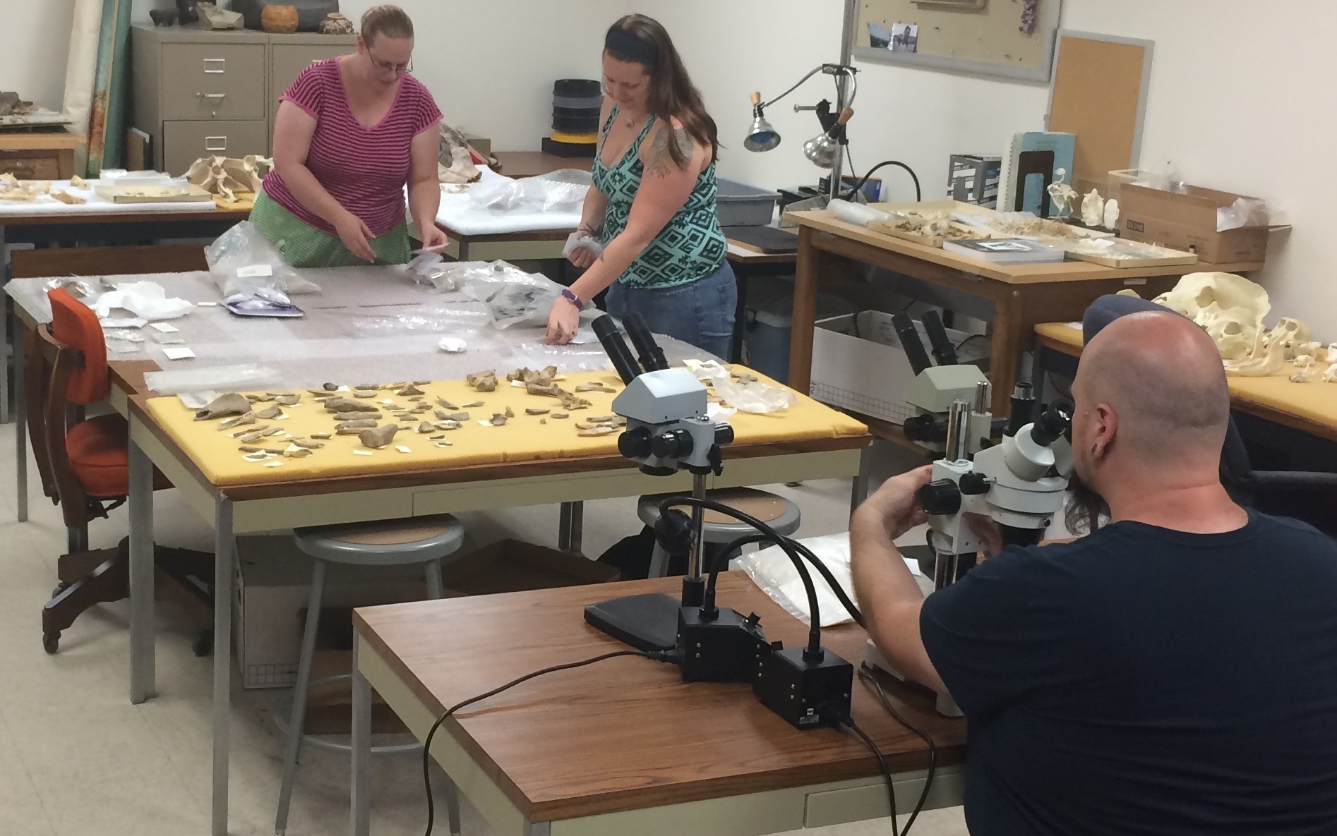 An image of three people working in the Zooarcheology lab