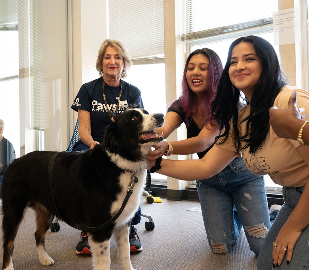 students petting a therapy dog in the central library