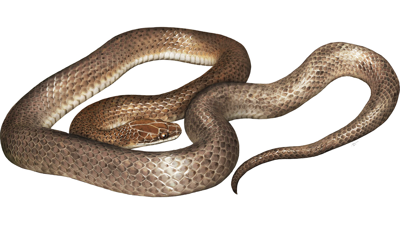 A new species of snake