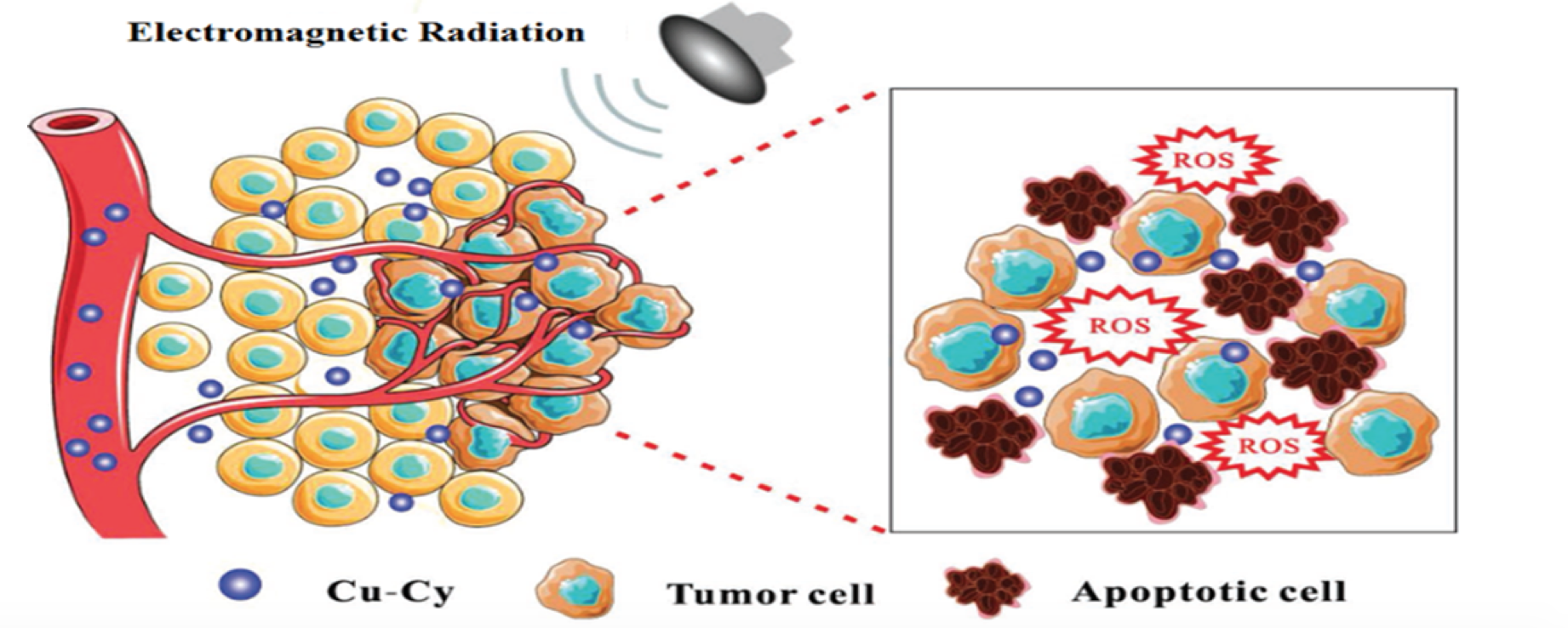 How the activated nanoparticle kills cancer cells