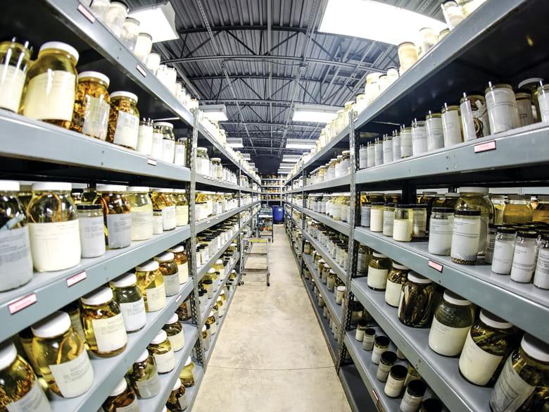 Amphibian Lab
