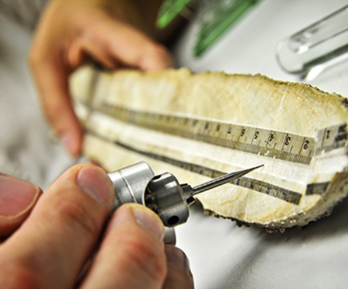 A sample being measured